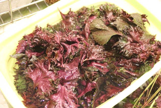 赤紫蘇の葉を取って洗います