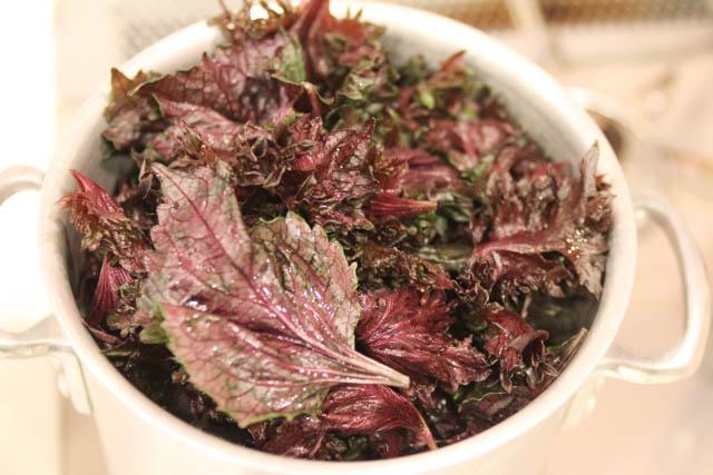 赤紫蘇をお湯で煮ます