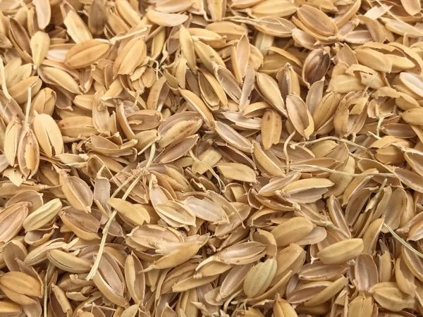 籾殻(もみがら)