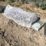 不織布で、保温対策、保湿対策、防風対策