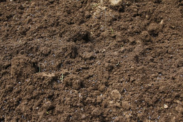 土に苦土石灰をまく