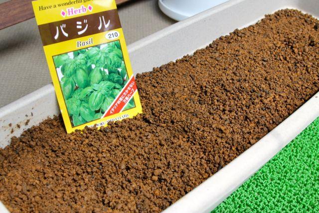 永田農法でバジルを種から栽培する