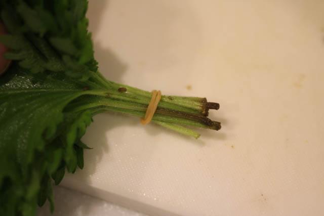 大葉の茎を切る前