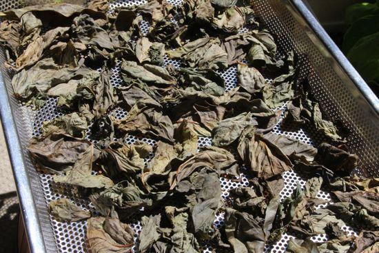 乾燥バジル(ドライバジル)の作り方 後半1