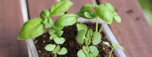 栽培の基本