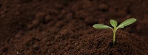 有機栽培(オーガニック)肥料/栽培