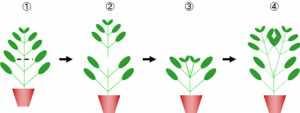 栽培の定番コンテンツ